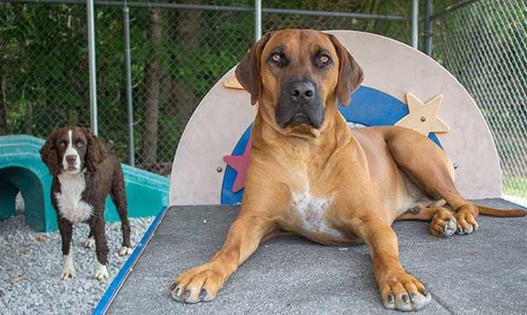 Dog Daycare Boarding Baxter Cookeville Tn Copyright Pet Resort
